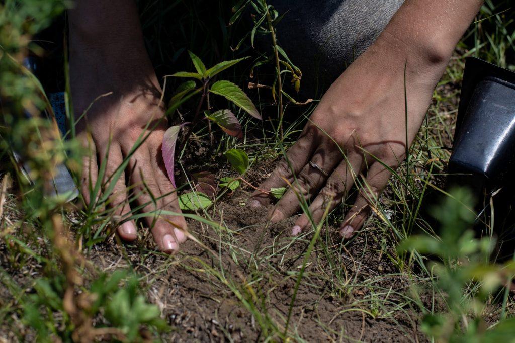 Planting at ABOS