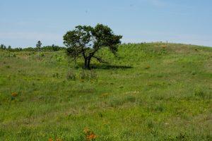 ABOS Lone Oak